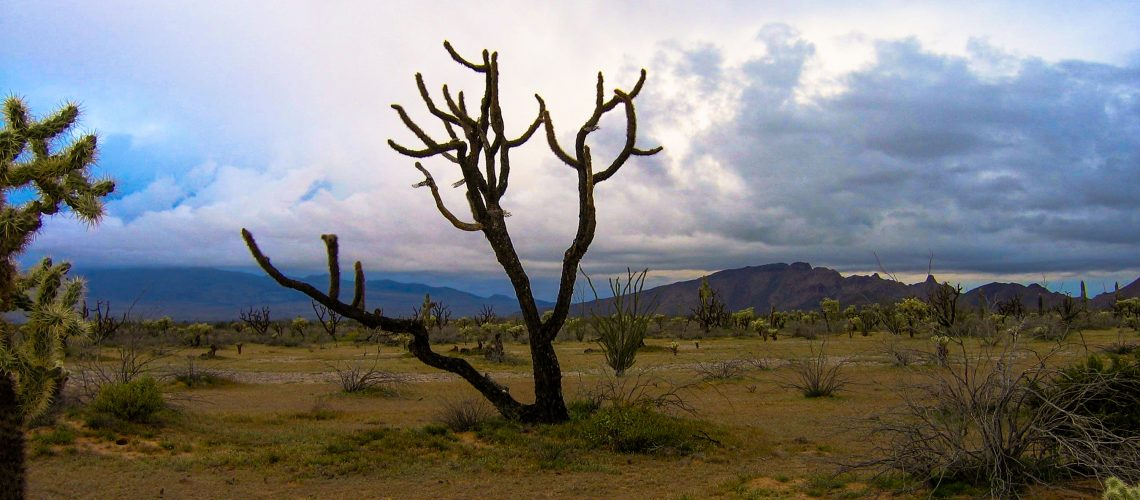 pinacate7